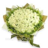 99朵白玫瑰白色年华